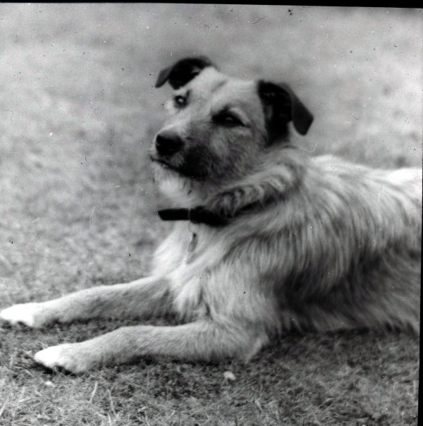 Skipper was a wire haired terrier